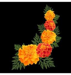 marigolds on black vector image