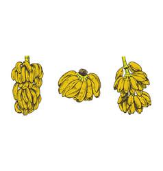 banana fruit sketch for vector image