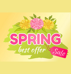 best offer spring sale advertisement daisy flowers vector image