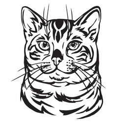 Decorative portrait bengal cat vector