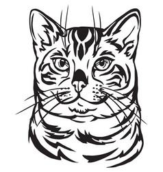 Decorative portrait of bengal cat vector