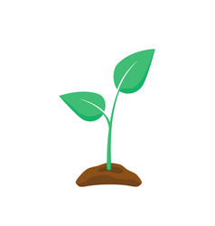 green seedling silhouette plant nurturing vector image