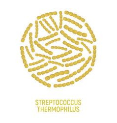 streptococcus thermophilus icon probiotic concept vector image