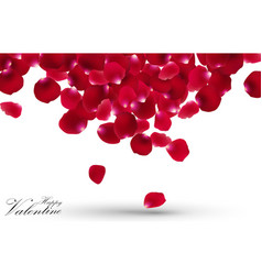 Valentines day with rose petals on white vector