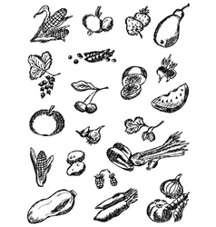 Collection of the drawn vegetables and fruit vector image vector image