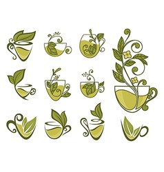 organic tea collection vector image