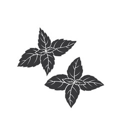 Basil glyph icon vector