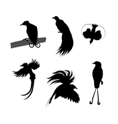 Birds of paradise silhouettes vector image