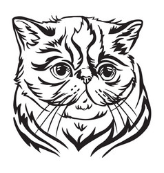 Decorative portrait exotic shorthair cat vector
