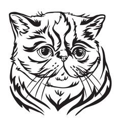 Decorative portrait of exotic shorthair cat vector