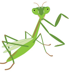 Green mantis animal nature art background cartoon vector