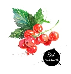 Hand drawn watercolor painting red currants on vector
