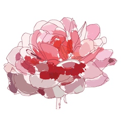 pink rose vector image