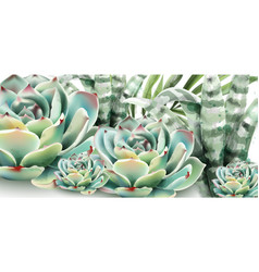 succulents and aloe vera watercolor vector image