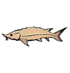 sturgeon freshwater fish vector image