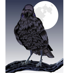 The formidable raven vector