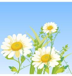 cartoon daisy flowers vector image vector image
