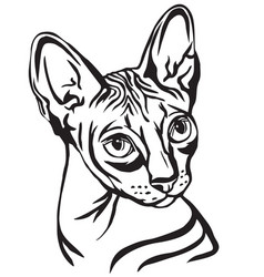 Decorative portrait of sphynx cat vector