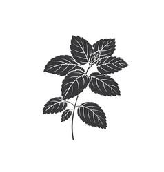 Lemon balm bunch glyph icon vector