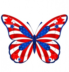USA butterfly vector image