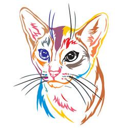 Colorful decorative portrait of abyssinian cat vector