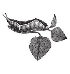 Larva of dicranura vinula vintage vector