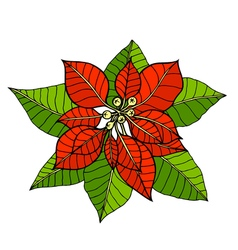 Some branches of poinsettia vector
