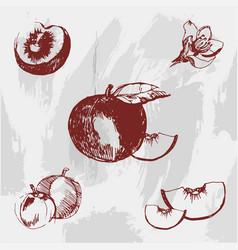vintage ink hand drawn peach on grunge background vector image