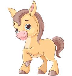 baby horse vector image