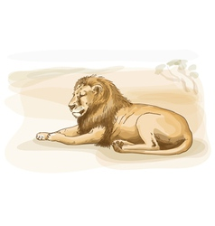 lion watercolor style vector image
