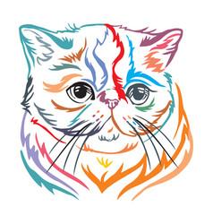 Colorful decorative portrait exotic shorthair vector