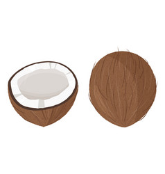 Fresh whole and a half coconut realistic vector