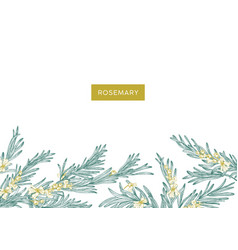 Natural banner template decorated with rosemary vector