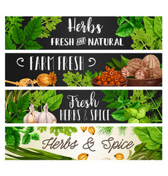 Spices and herbs natural cooking seasonings vector