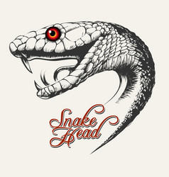 snake head vector image vector image