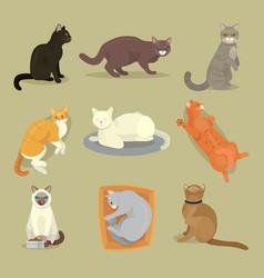 different cat breeds cute kitty pet cartoon cute vector image
