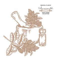 Amaranth flowers and leaves medical plants set vector