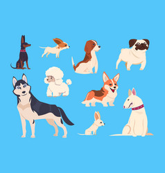 Cartoon dogs breeds corgi and husky poodle and vector