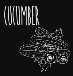 Chalkboard cucumber vegetable vector