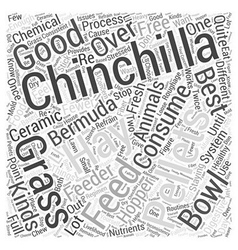 Chinchillas Staying Healthy With Pellets and Hay vector image