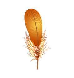 colorful feather icon realistic style vector image