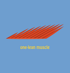 Flat of structure skeletal muscle anatomy vector