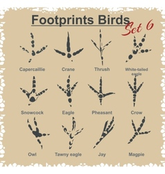 Footprints Birds - set vector