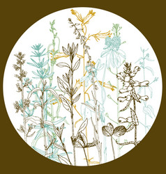 Round template with drawing herbs and flowers vector