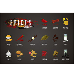Spices and seasoning cooking ingredients vector