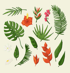 tropical flowers and leaves object set vector image