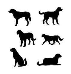 Breed of a dog St Bernard silhouettes vector image