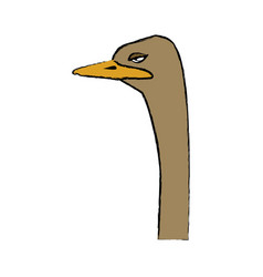 Head ostrich birds of savannah african fauna vector