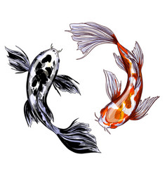Two koi carps with red and black spots vector