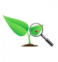 magnifying glass and ladybug vector image